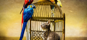 Galera: topi di campagna e topi di città