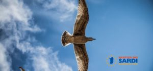 I sardi devono essere liberi di volare