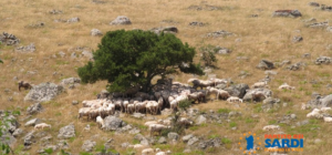 Le ragioni dei pastori: l'imbroglio del refresh