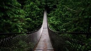 Questo-spettacolare-ponte-si-trova-in-bilico-oltre-le-cime-degli-alberi-Vancouver-Canada2