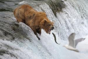 Non di dimensioni si tratta, ma di libertà. (Gli orsi possono mangiare pesci, ma non chi vola)