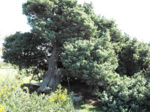 Il lavoro, gli alberi e i pannelli solari
