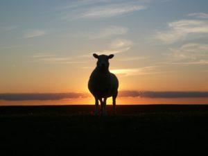 Pastorizia: pensare prima di fare, stare uniti e non bisticciare